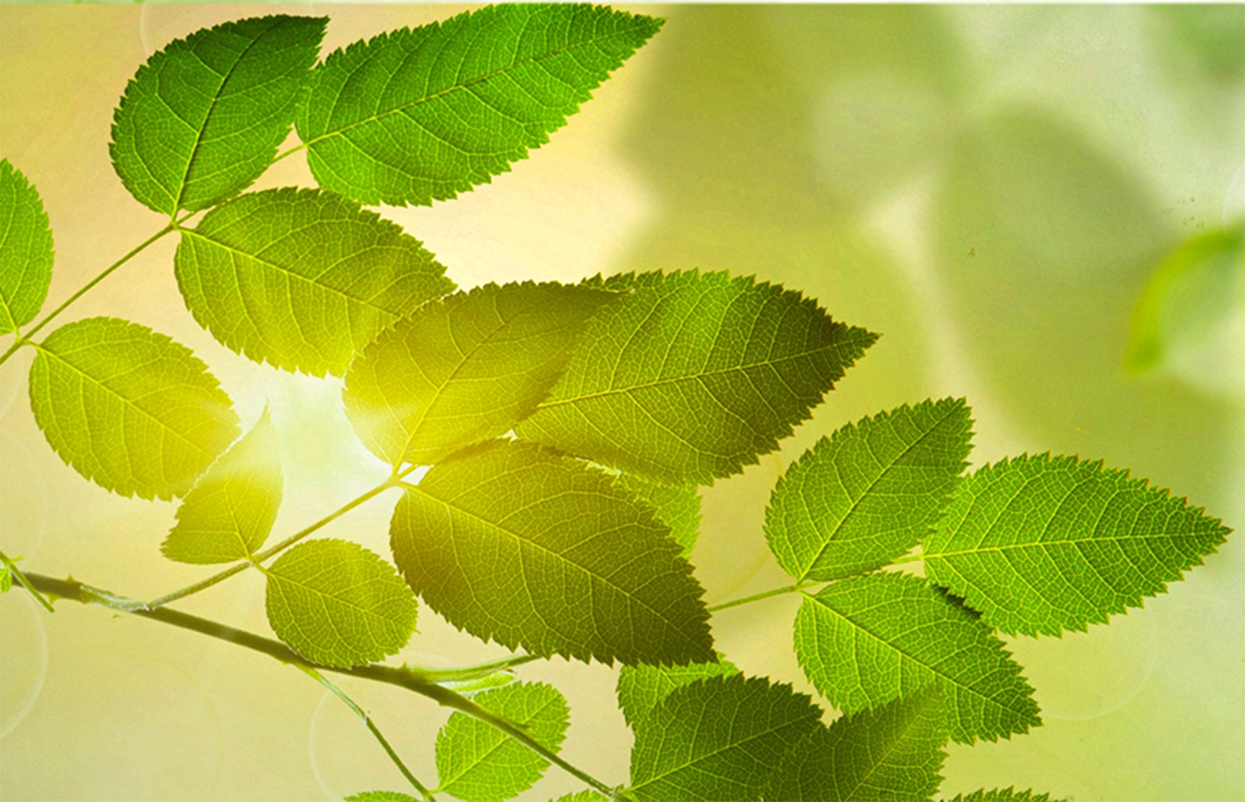 Sunlight and green leaves